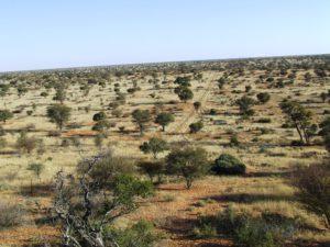 About Kalahari 1