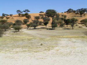 About Kalahari 3