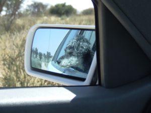 Waldo whizzing along en route to the Kalahari